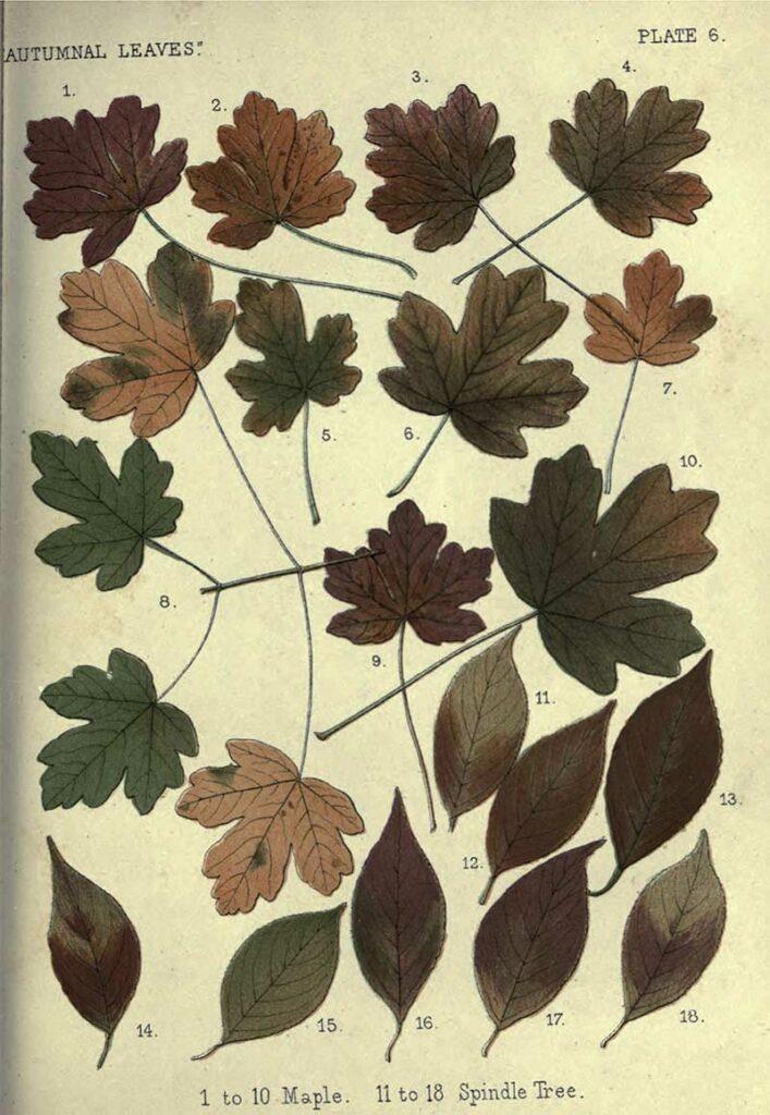 Fall leaves charts
