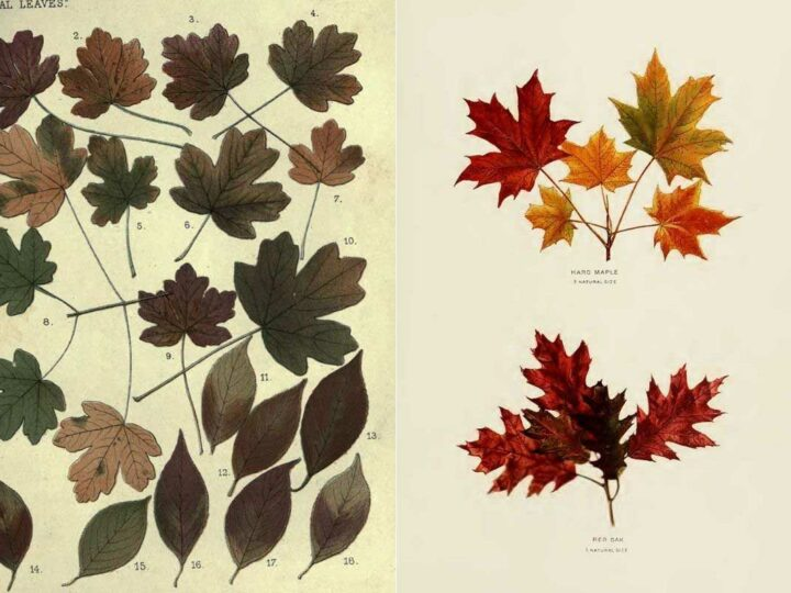 Autumn leaves chart