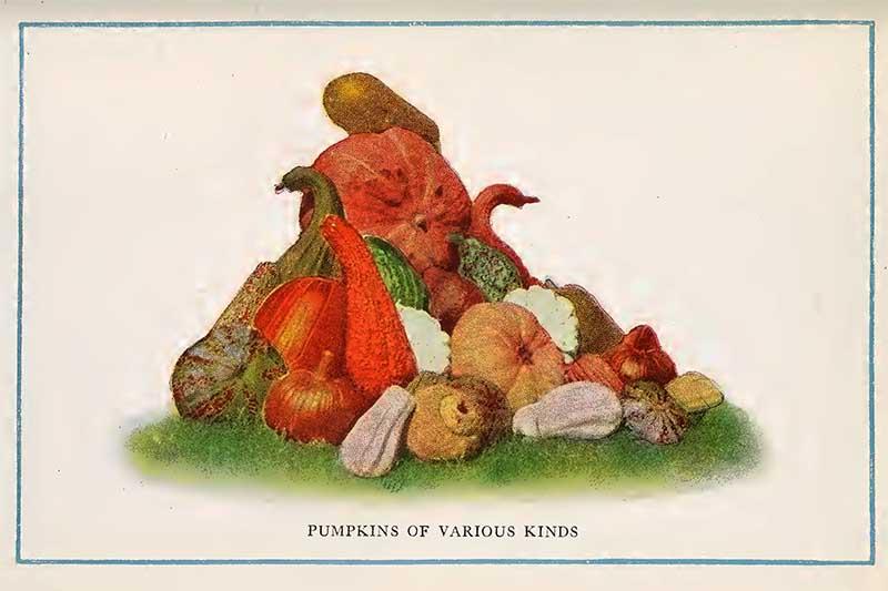 Pumpkins vintage print