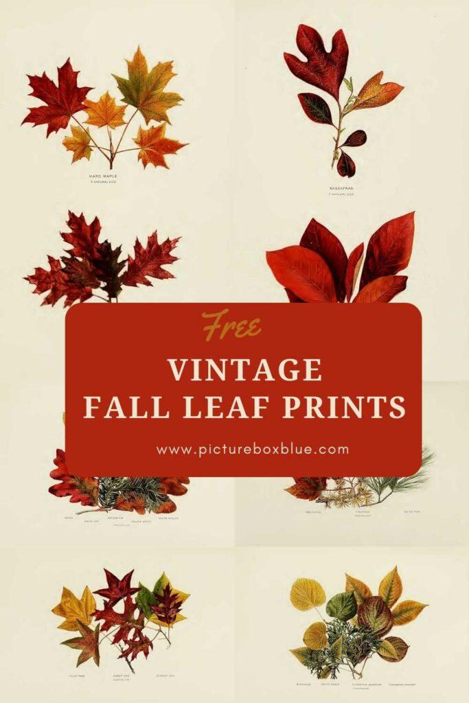 Vintage Fall Leaf prints