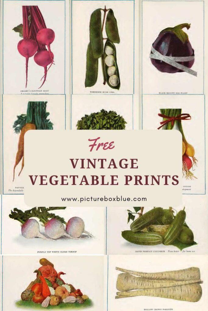 vintage vegetable prints