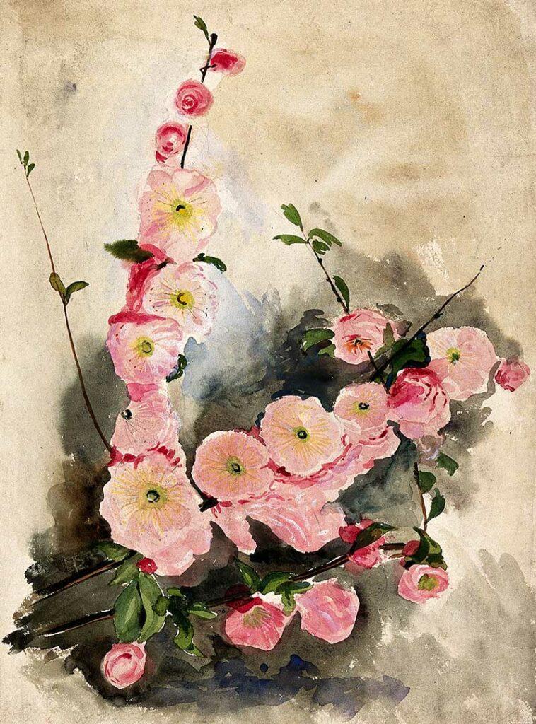 Blossom of an ornamental cherry (Prunus species).