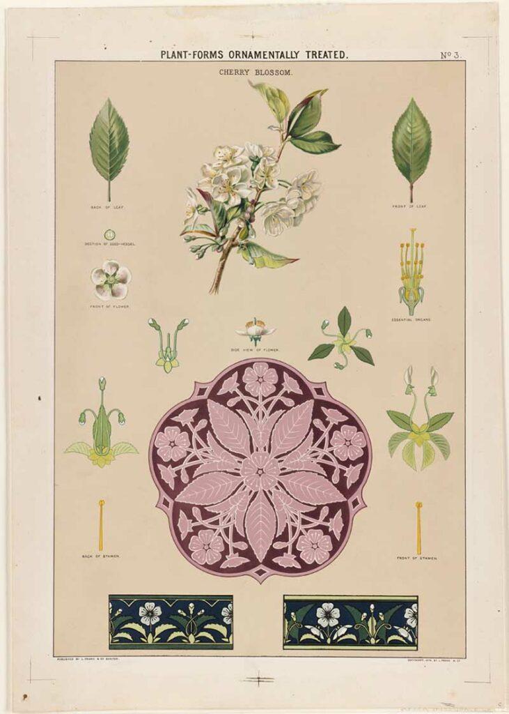 Plant-Forms_Ornamentally_Treated_-_Cherry_Blossom_