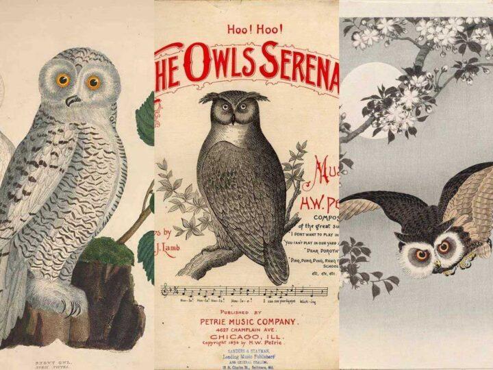 owl-drawings